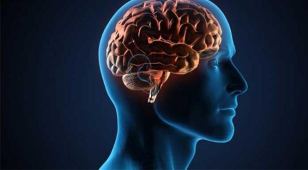 En Önemli Organımız Beynimiz Üzerine...